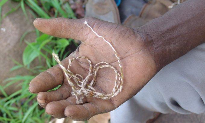 Corde fabriquée avec écorce de iteophylla
