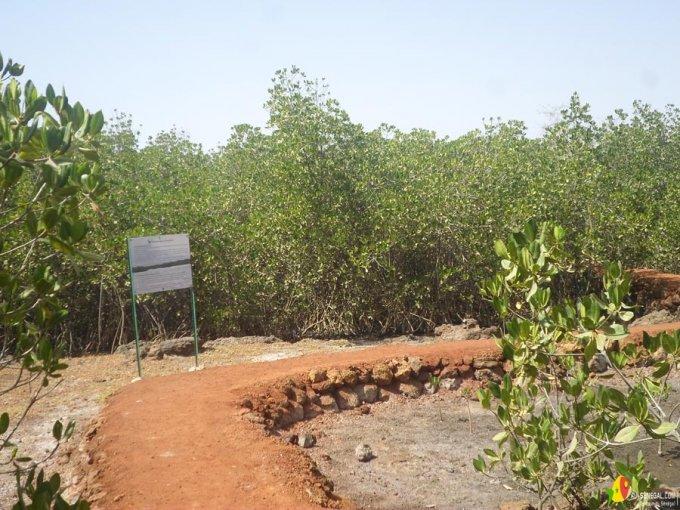 Sentier écologique-Somone-Sénégal